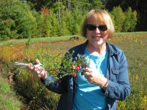 Amil's Inn guest, Paula, enjoying Wetherby Cranberry marsh to snip some cranberry vines for room decorations