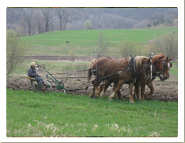 Amish: Plowing Field with Horses